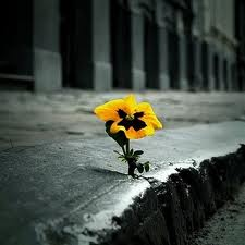 flor de asfalto.jpg
